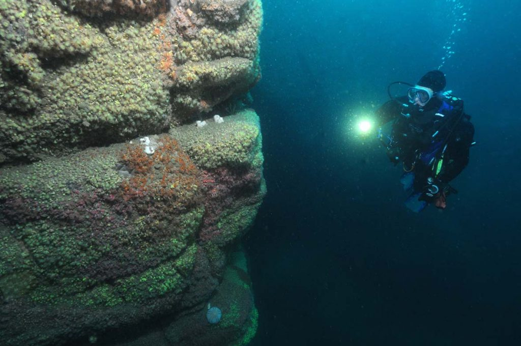 Plymouth Sound Divers at Hatt Rock